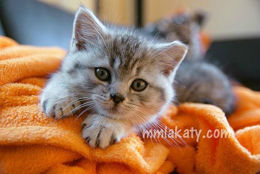 هل اشتري قطة في البيت ام لا