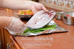 سمك السنجاري